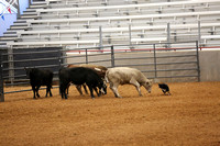 PRE-TRIAL CATTLE