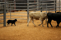 NATIONALS STARTED CATTLE